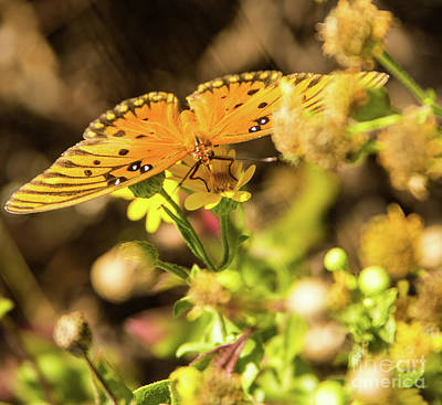 Photograph - Orange Wings by Steven Parker