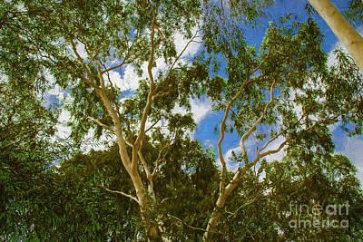 Photograph - Yellow Tree by Rick Bragan