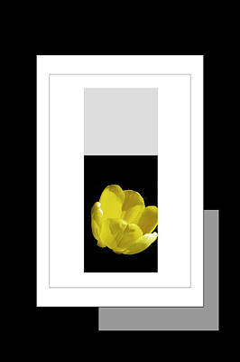 Installation Art Photograph - Yellow Tulip 2 Of 3 by Tina M Wenger