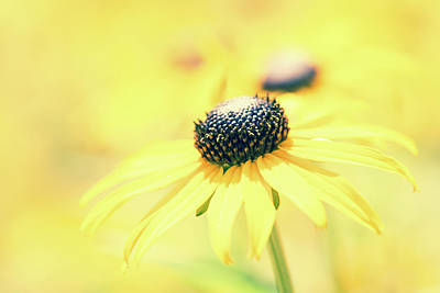 Photograph - Yellow by Wade Brooks