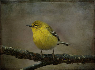 Photograph - Yellow Warbler by Diane Giurco