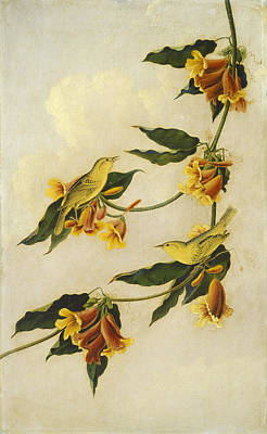 Painting - Yellow Warbler by John James Audubon