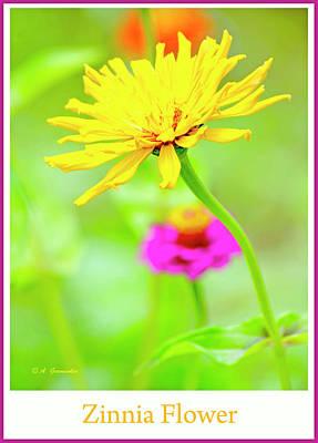 Photograph - Yellow Zinnia Flower by A Gurmankin