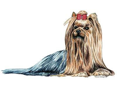 Dog Art Drawing - Yorkshire Terrier by Kathleen Sepulveda
