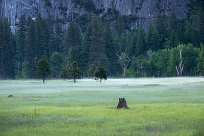 Owls - Yosemite Meadow by Greg McGill