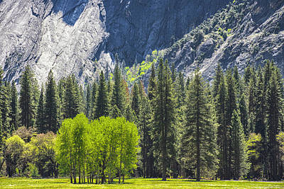Photograph - Yosemite Valley by Jim Pavelle