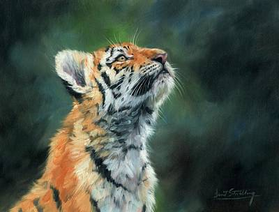 Siberian Wall Art - Painting - Young Amur Tiger by David Stribbling