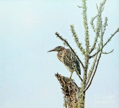 World Forgotten Rights Managed Images - Young Heron Royalty-Free Image by Irene Dowdy