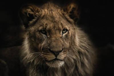 Photograph - Young Lion by Christine Sponchia