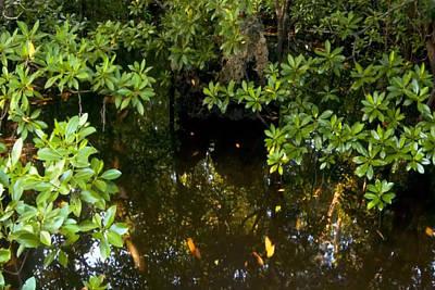 Mixed Media - Zanzibar Island Swamp Marshes Wetlands Vegitation Trees Fish Water Crabs Eggs Habitat  by Navin Joshi