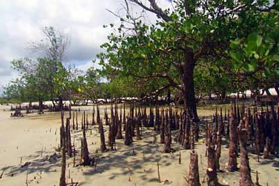 Zanzibar Island Vegitation Jungle With Coconut Trees And Home To Fox Head Bats Giant Mouse Crabs Wei Art Print by Navin Joshi