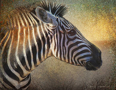 Zebra Face Study Art Print by R christopher Vest