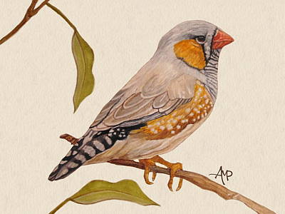 Finch Painting - Zebra Finch by Angeles M Pomata