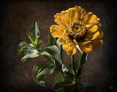 Photograph - Zinnia  by Endre Balogh