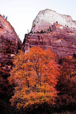 Photograph - Zion National Park by Norman Hall