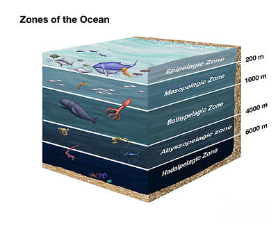 Info Graphic Photograph - Zones Of The Ocean by Spencer Sutton