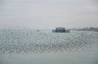 Curated Travel Chargers - Amazing spectacle of starlings birds murmuration flying over sea by Matthew Gibson