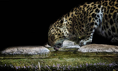 Forrest Photograph - Amur Leopard by Martin Newman