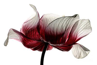Anemone Art Print by Mark Johnson