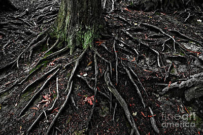 Photograph - Forest Setting With Close-ups Of Tree Roots  by Jim Corwin