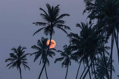 Photograph - Koggala - Sri Lanka by Joana Kruse