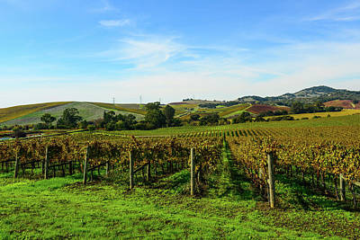 Photograph - Napa Valley California Vineyard by Brandon Bourdages