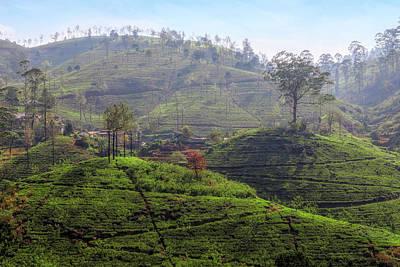 Photograph - Nuwara Eliya - Sri Lanka by Joana Kruse