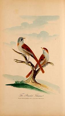 Nature Painting - Oecumenical History Of British Birds by MotionAge Designs