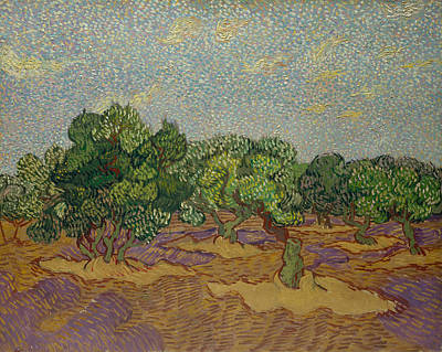 Post-impressionism Painting - Olive Trees by Vincent van Gogh