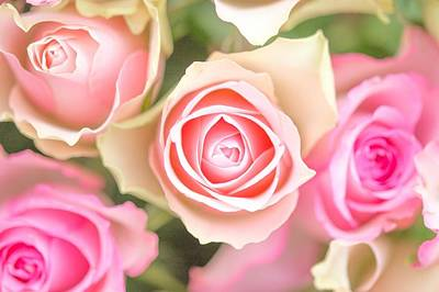 Rose Digital Art - Rose by Maye Loeser