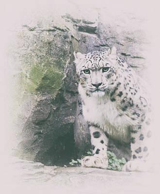 Berlin Art Photograph - Snow Leopard by Martin Newman