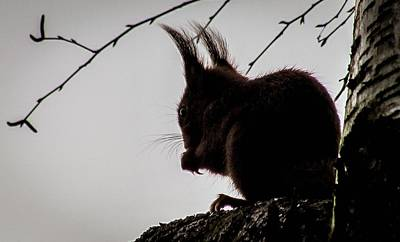 Photograph - Squirrel by Cesar Vieira