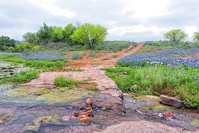 Photograph - Texas Bluebonnets 9 by Victor Culpepper