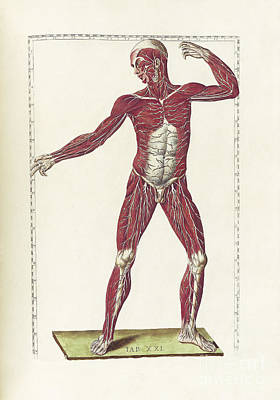 18th Century Digital Art - The Science Of Human Anatomy by National Library of Medicine