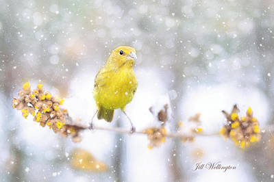 Digital Art - Winter Birds by Jill Wellington
