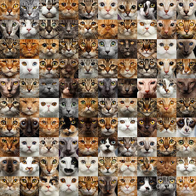 Photograph - 100 Cat Faces by Sergey Taran