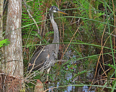 Photograph - 100- Great Blue Heron by Joseph Keane