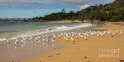 Photograph - 100 Little Seagulls Standing by Lexa Harpell