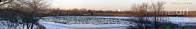 Photograph - 10,000 Geese II by Verana Stark