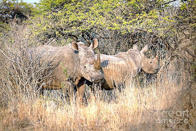 Rhinoceros Photograph - 1026 Southern White Rhino's by Steve Sturgill
