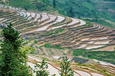 Photograph - Longji Terraced Fields Scenery by Carl Ning