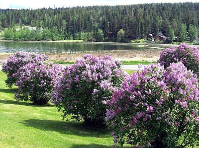 Photograph - 103 Mile Lake Lilacs by Will Borden