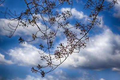 Modern Feathers Art - Cherry Blossoms by Robert Ullmann