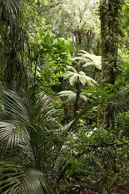 Tree Fern Photograph - Jungle by Les Cunliffe