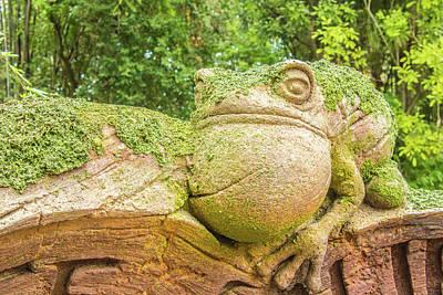 10710  Froggy Original