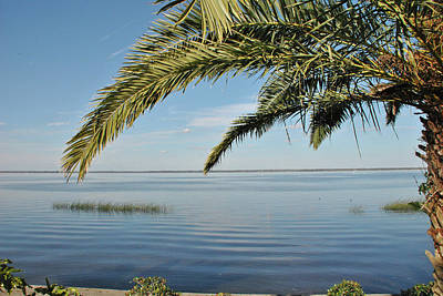 Photograph - 10741 Paradise Palm by Pamela Williams