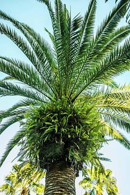 Photograph - 10742 Paradise Palm by Pamela Williams