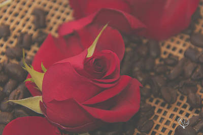 Photograph - 10753 Red Rose by Pamela Williams