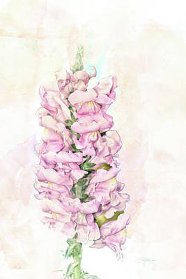 Mixed Media - 10855 Snap Dragon by Pamela Williams