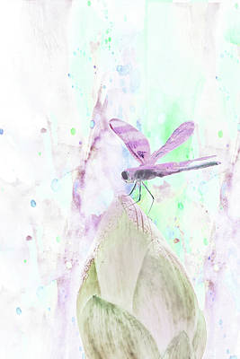 Photograph - 10864 Dragon Fly by Pamela Williams
